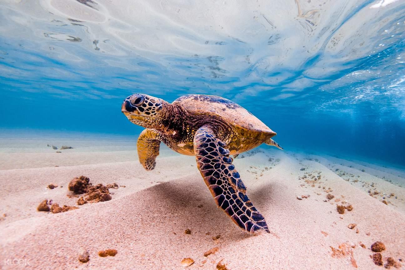 歐胡島通票,歐胡島景點通票,夏威夷,夏威夷潛泳