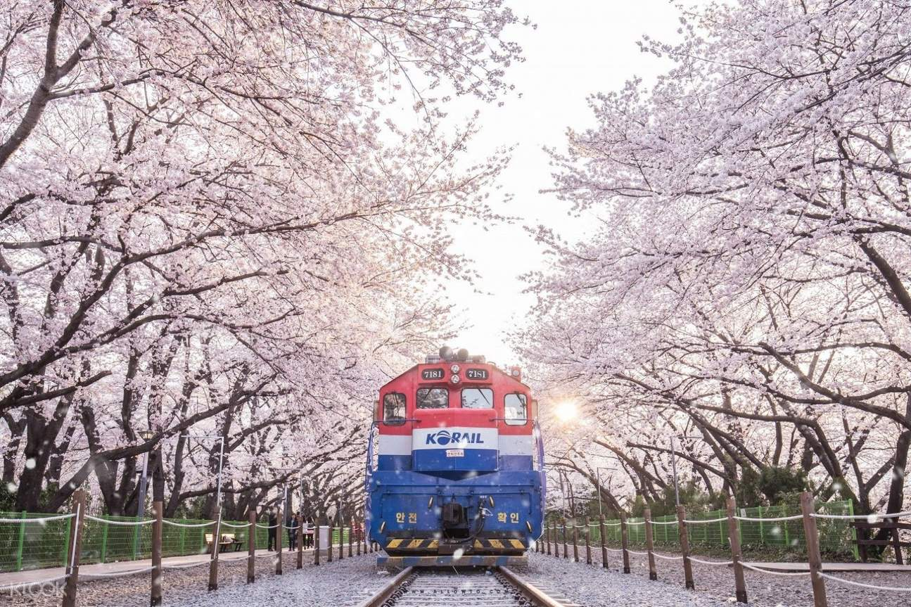 gyeonghwa station with cherry blossoms