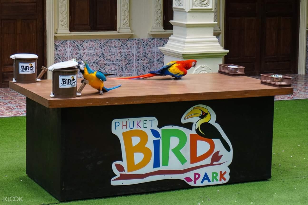 bird show Phuket Bird Park