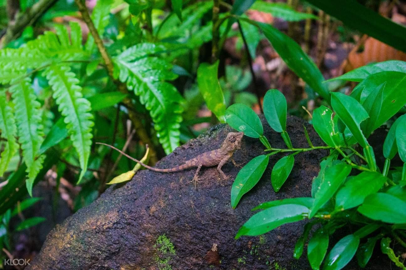 斯里蘭卡 辛哈拉加熱帶雨林Sinharaja