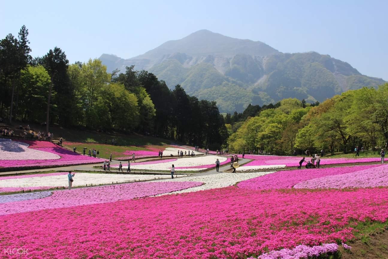 hitsujiyama park seibu day pass
