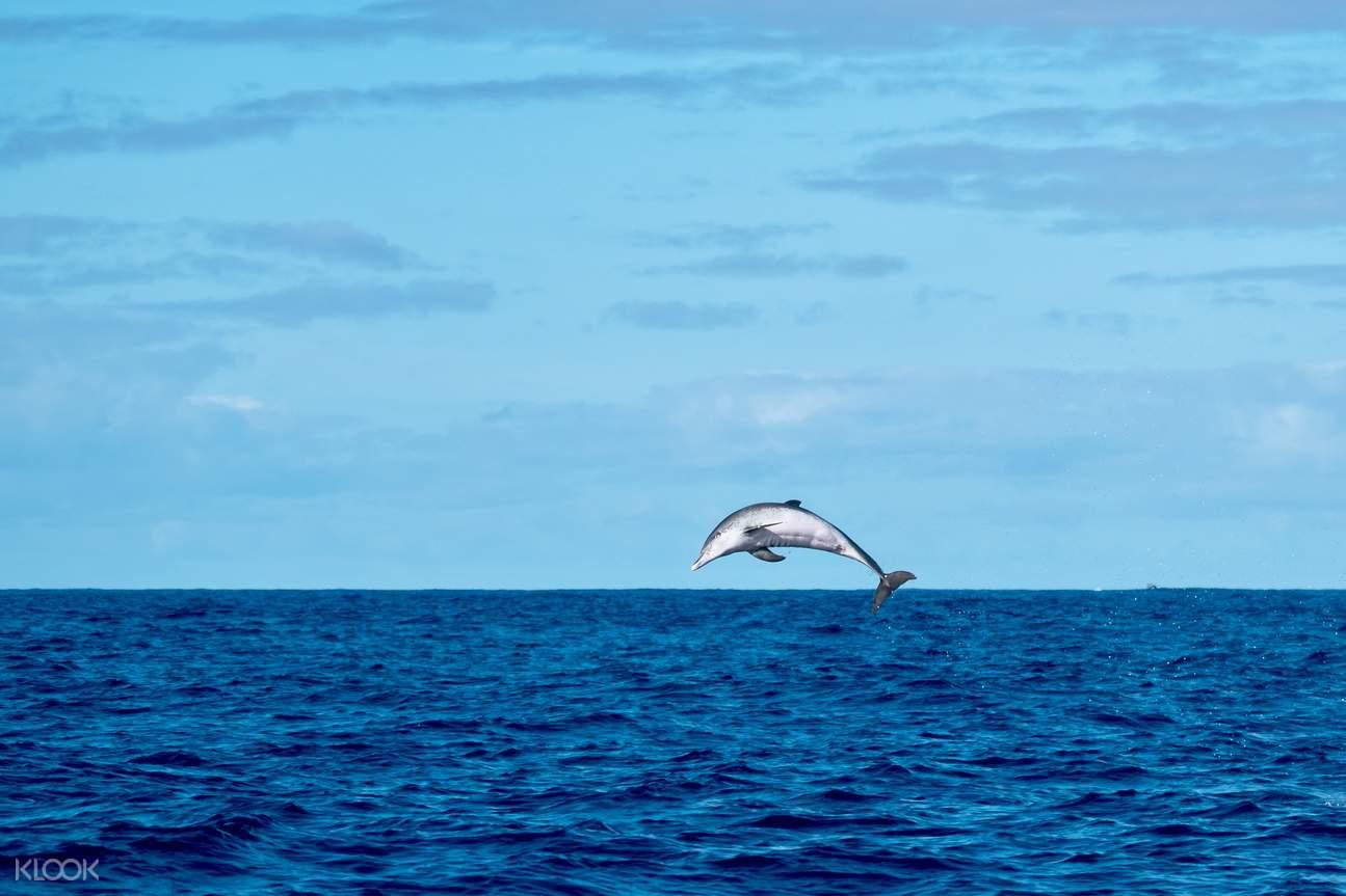 Goa dolphins