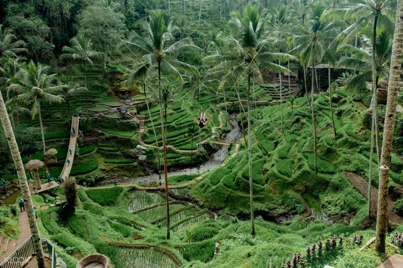 mountain edge swing in bali