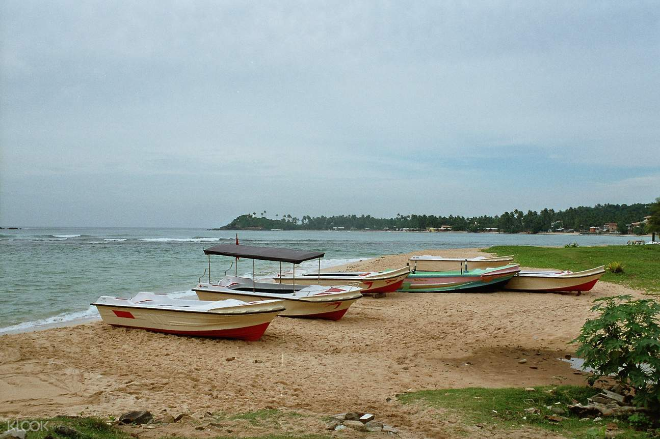 斯里兰卡 乌纳瓦图纳Unawatuna丛林海滩 & 鲸鱼观看