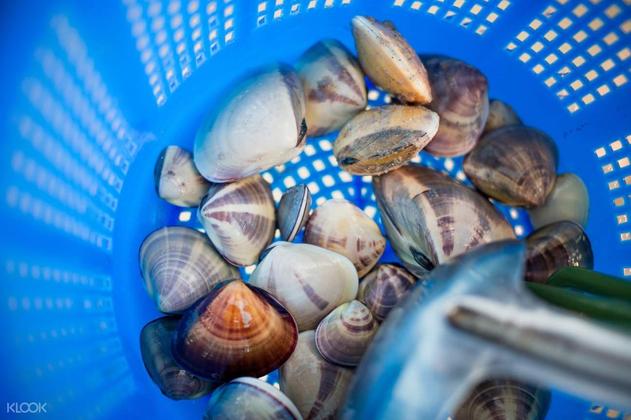 台湾金门海人体验(捡海螺 & 挖花蛤 & 海港岩岸垂钓)