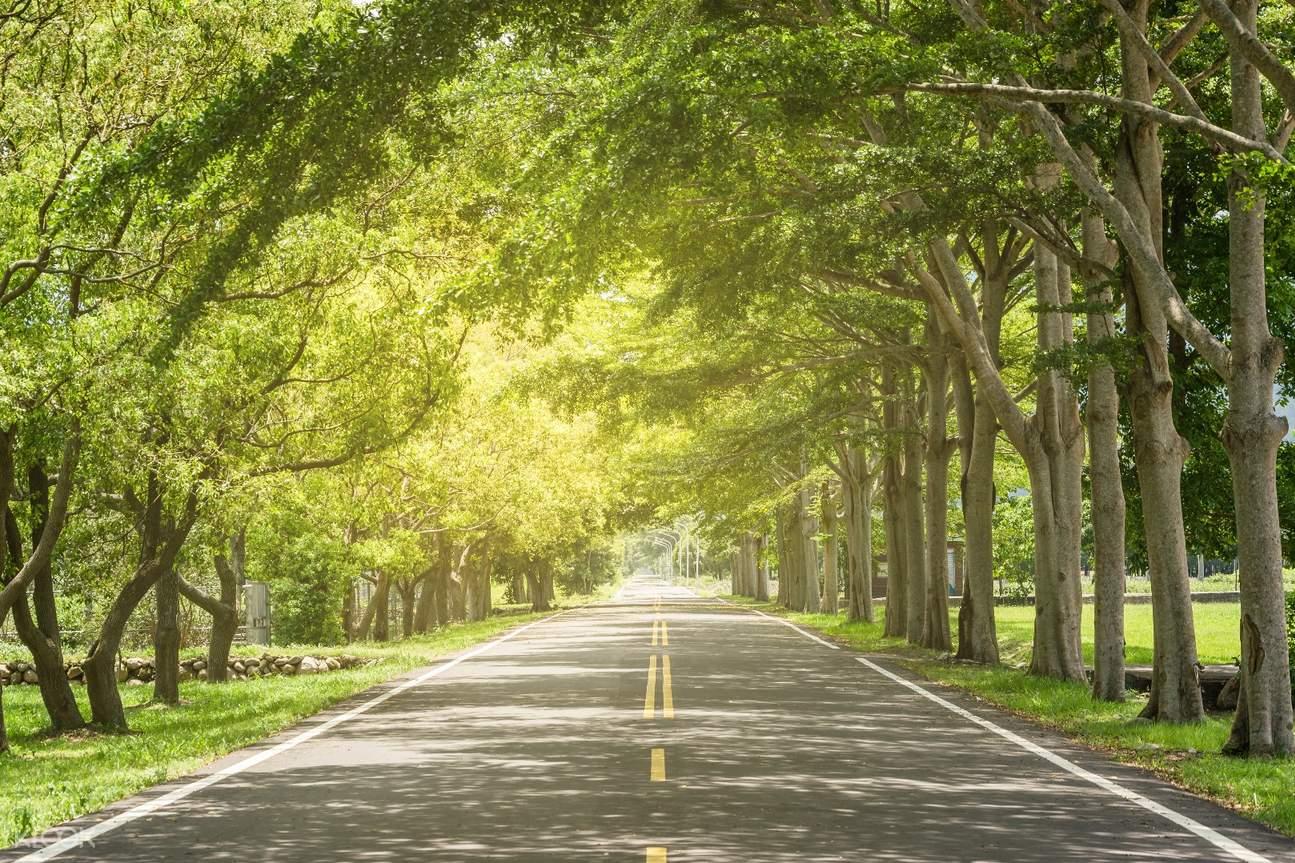 伯朗大道,鹿野高台,大坡池,台东一日游,便当博物馆