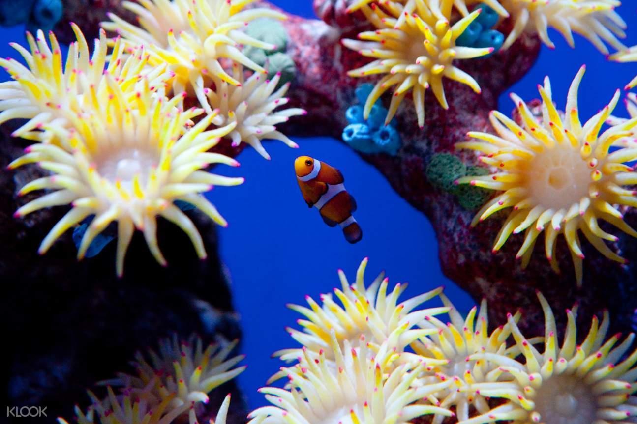 芭提雅海底世界