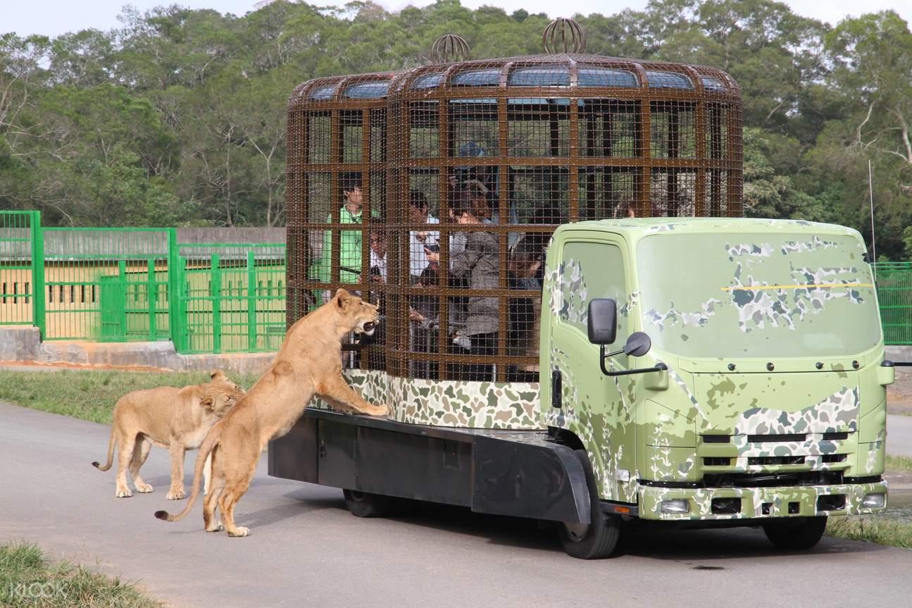 cage car experience taipei