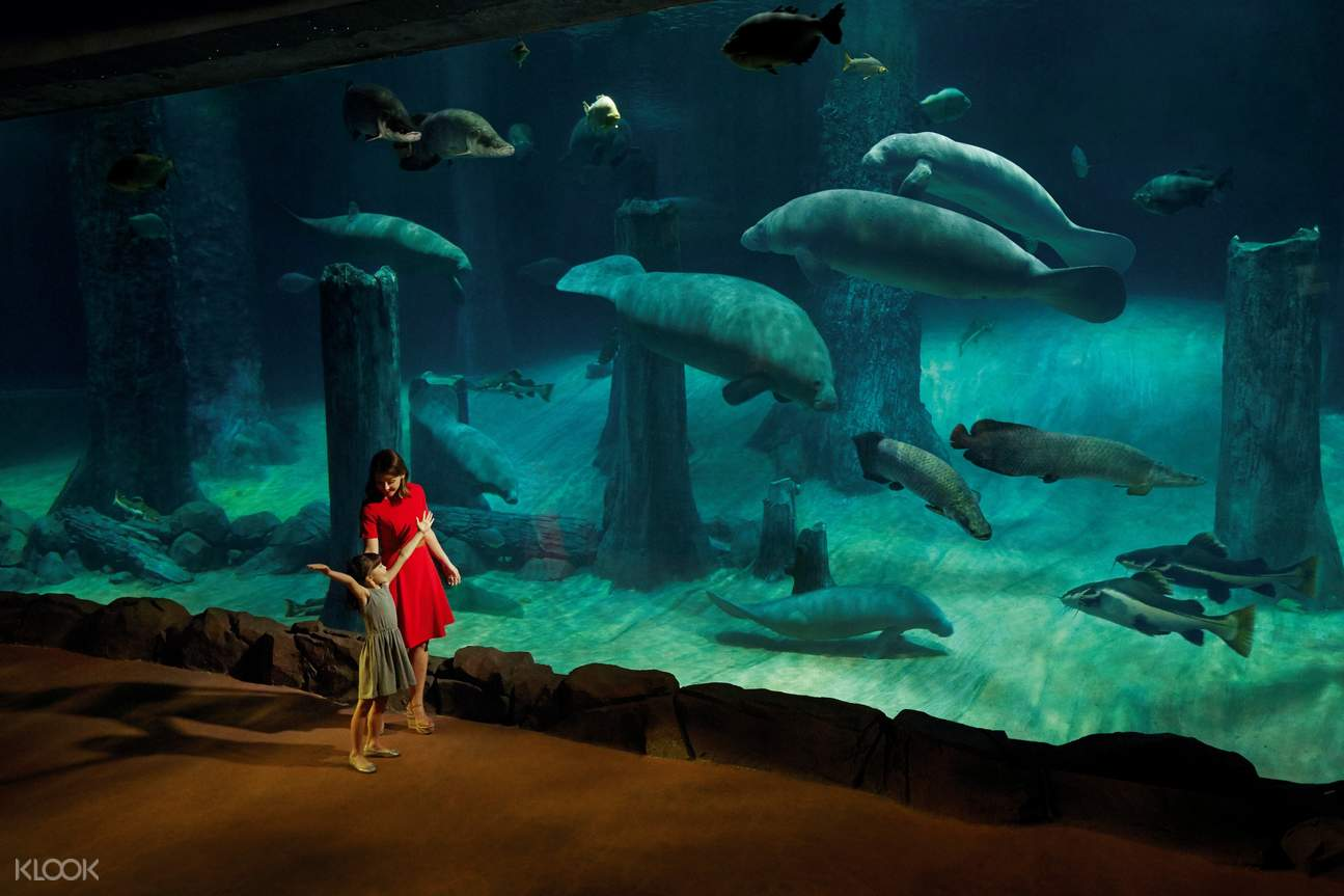 Check out the wildlife of Amazon Flooded Forest at River Safari!