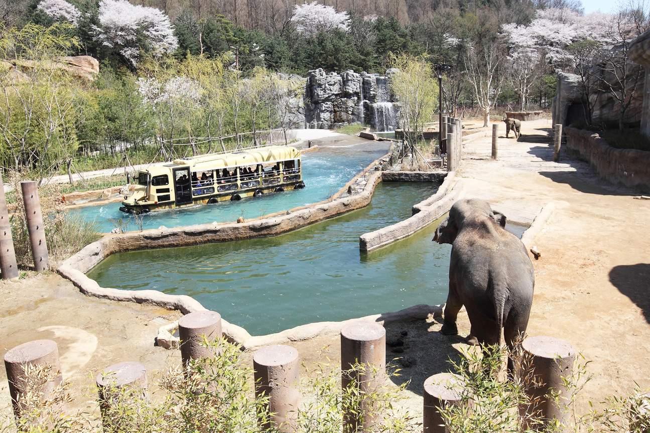 everland zoo