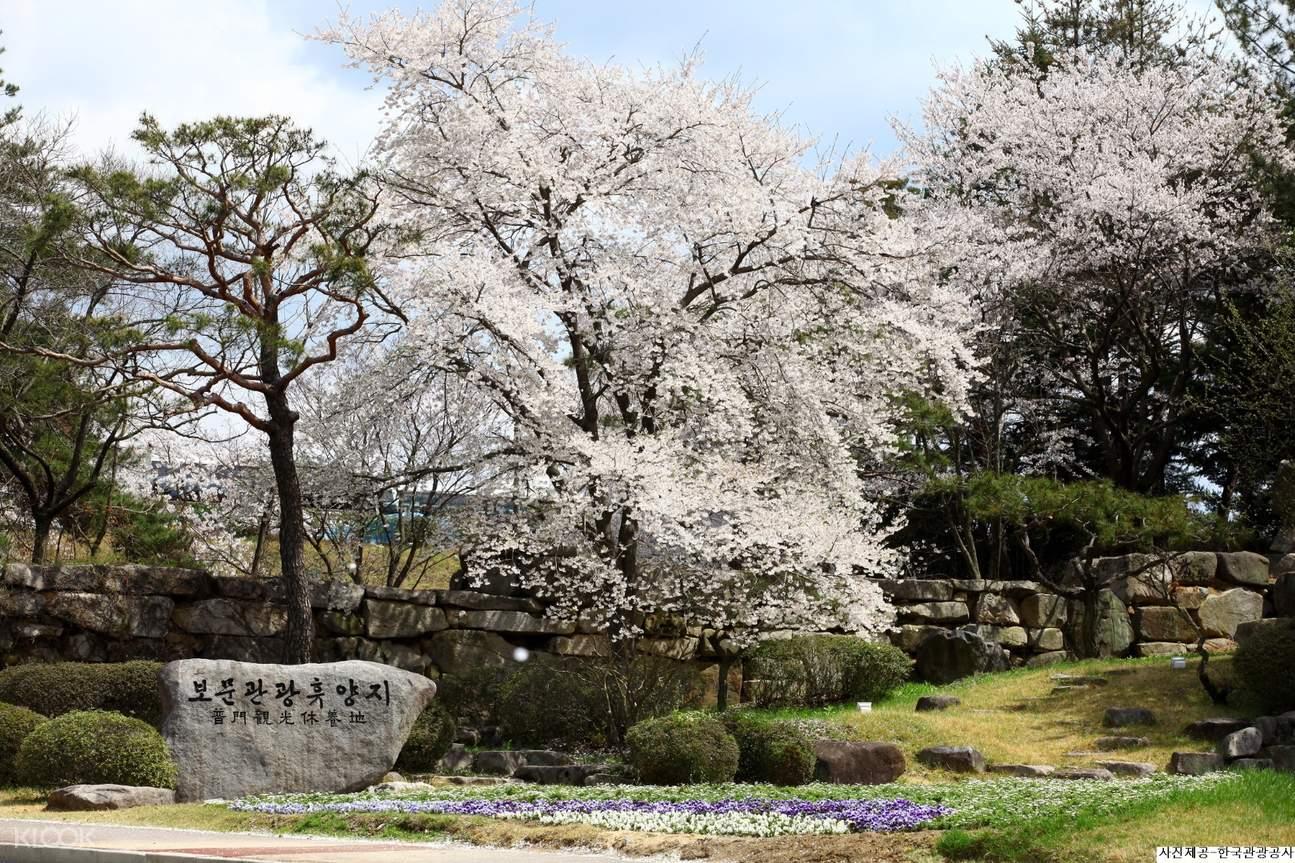 慶州櫻花節,慶州一日遊,韓國賞櫻花,春天賞櫻花,韓國春季限定