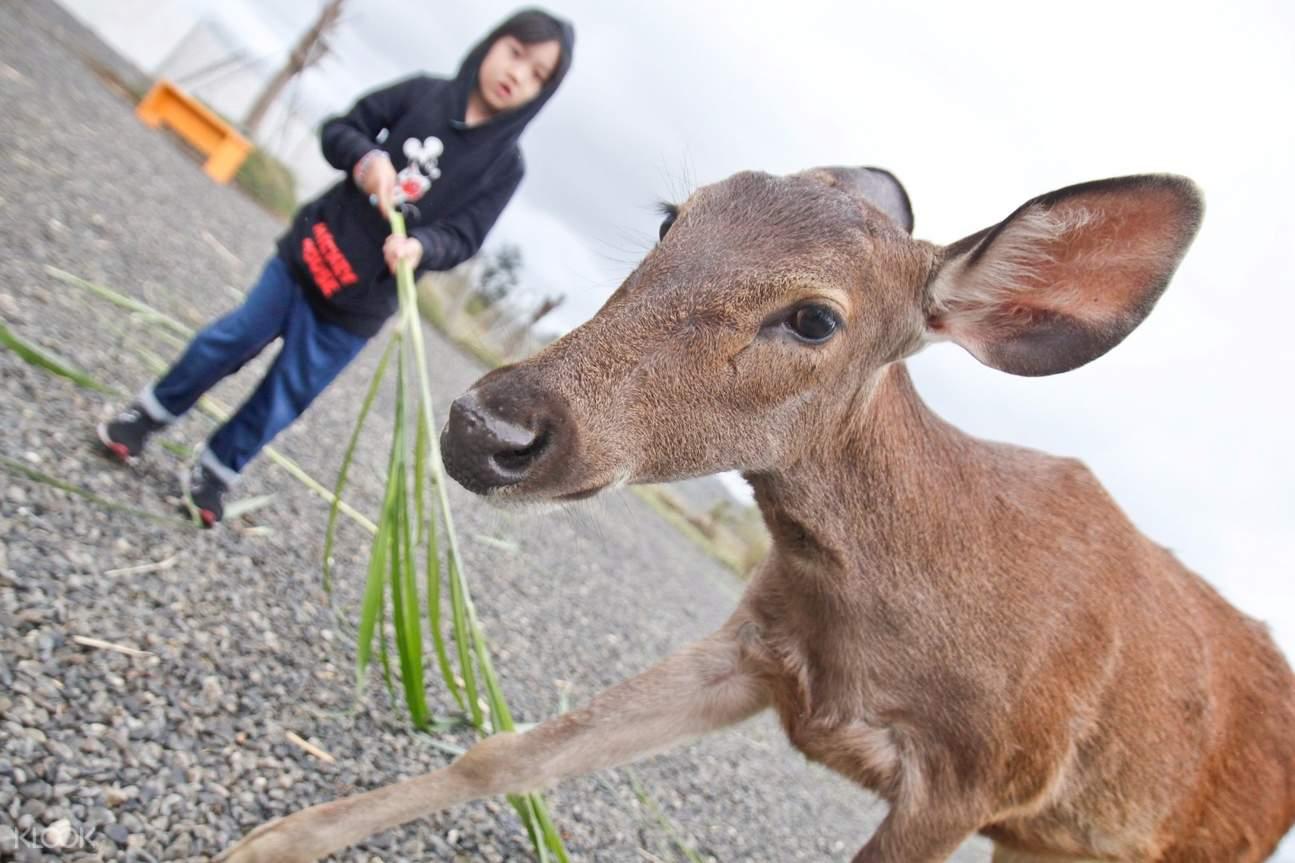 Kenting deer park