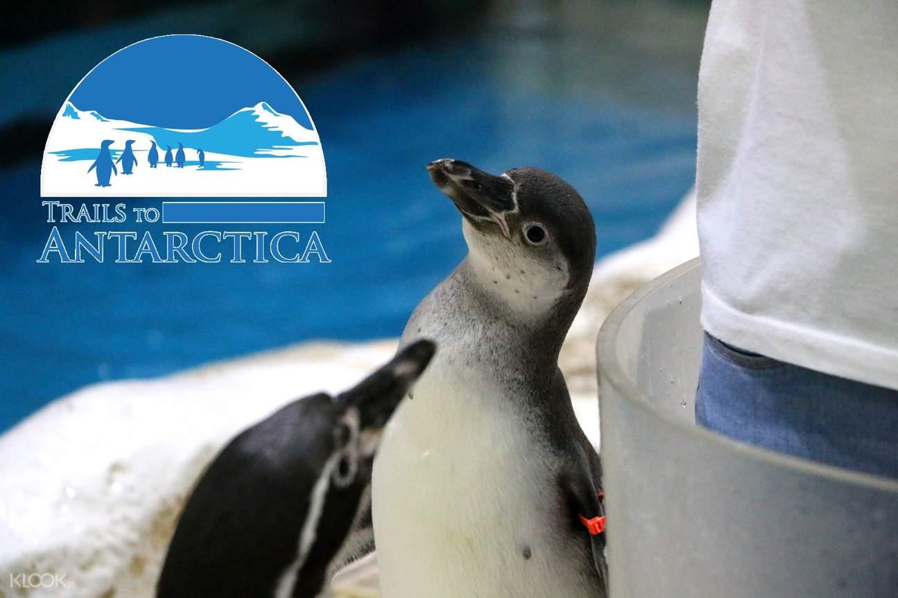馬尼拉海洋公園 南極企鵝展