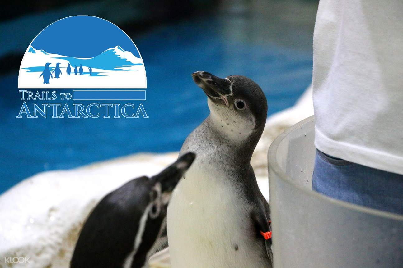 马尼拉海洋公园 南极企鹅展
