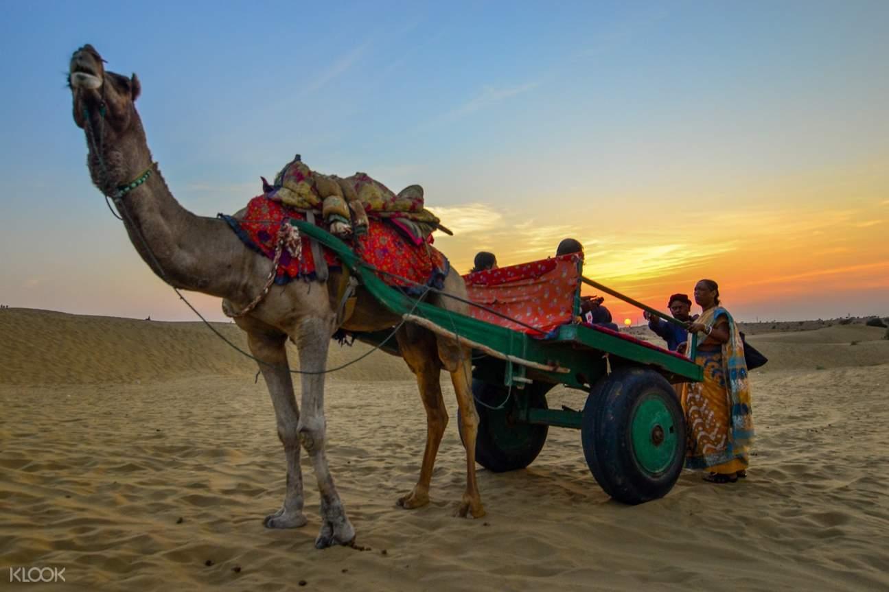 贾沙梅尔骆驼沙漠越野