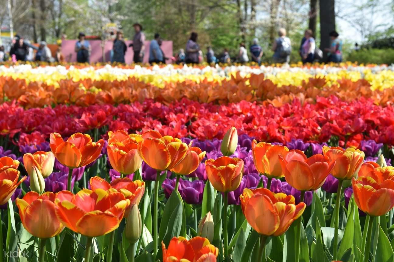 库肯霍夫,沃伦丹,风车村,库肯霍费一日游,沃伦丹风车村一日游,阿姆斯特丹周边一日游,荷兰村庄一日游,库肯霍夫花园