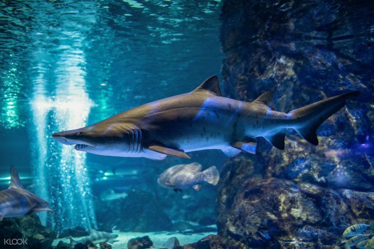 COEX 水族館