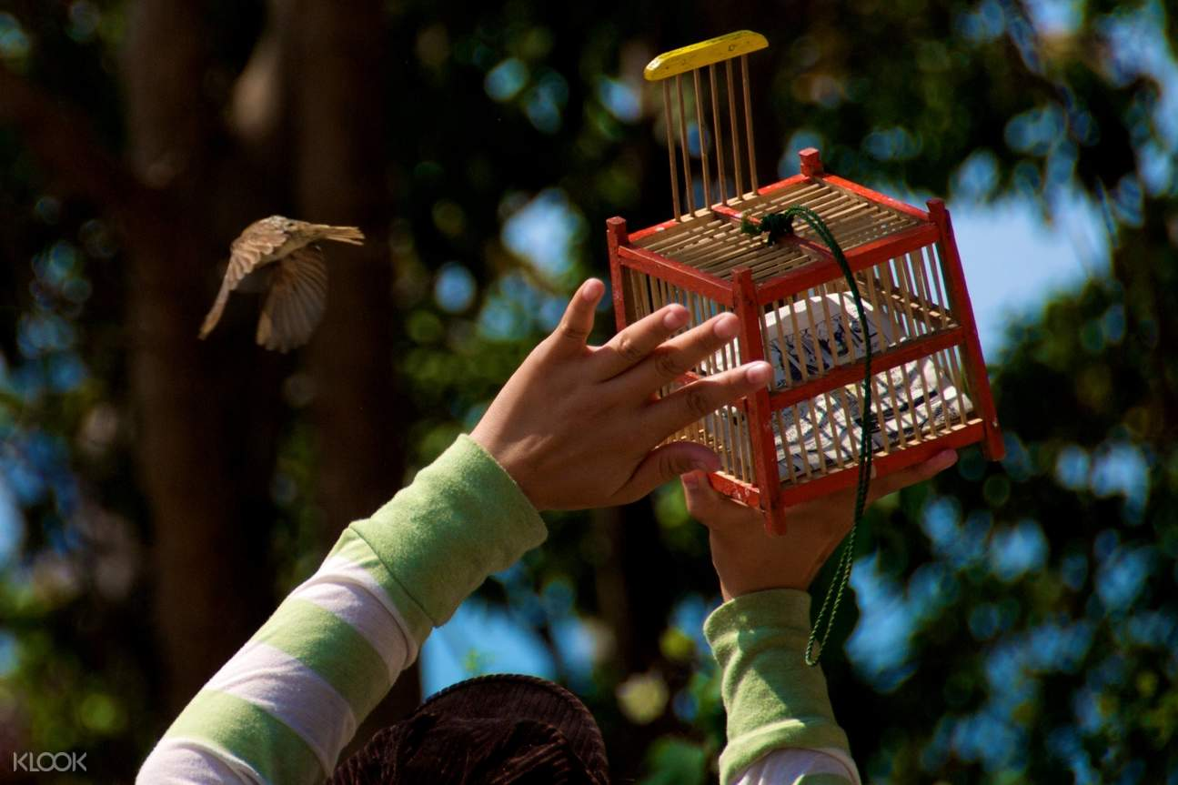 a hand releasing a bird from a cage
