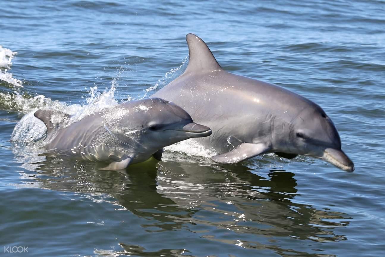 mandurah dolphin island adventure