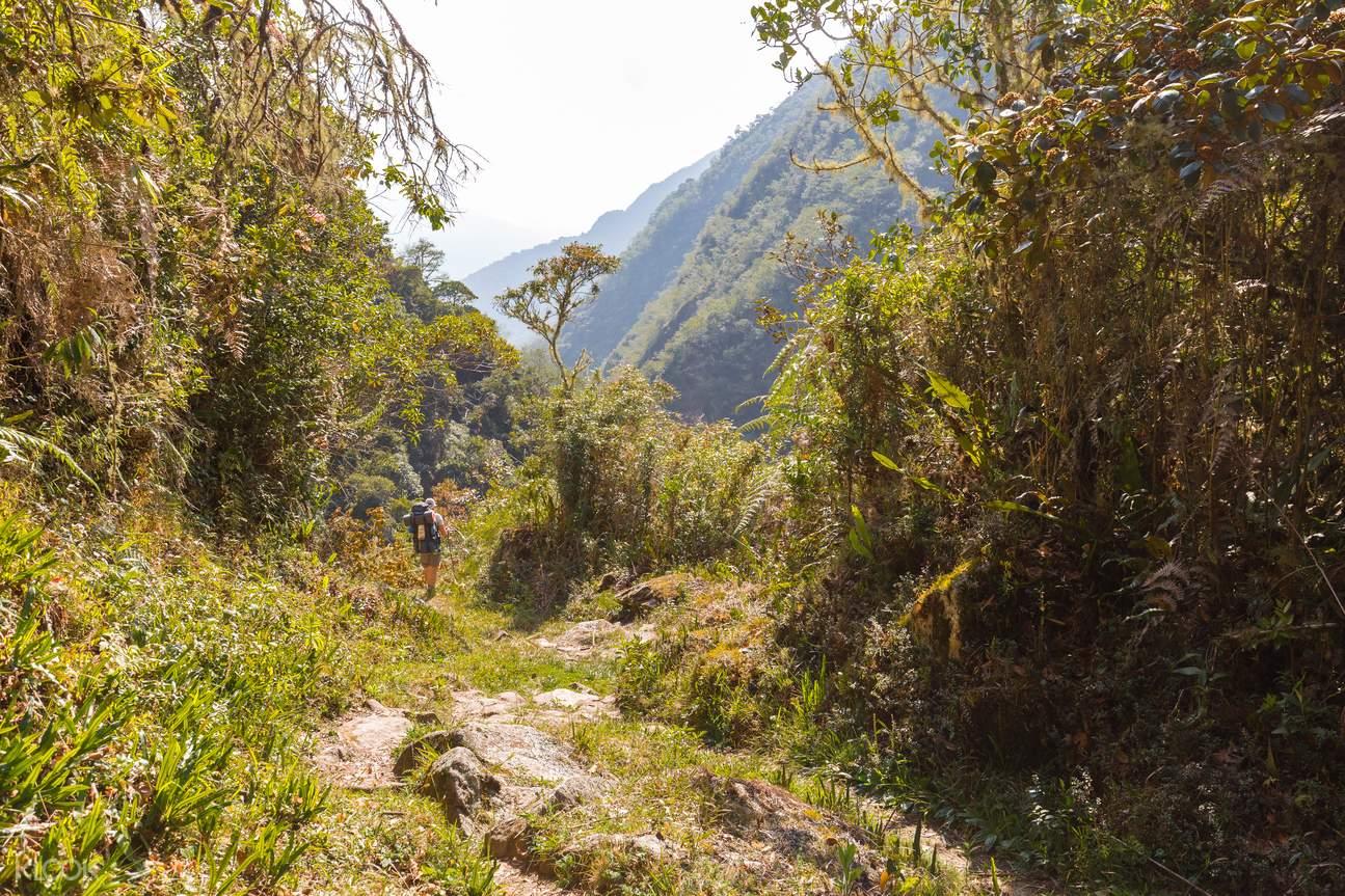 兰卡威,兰卡威清晨,兰卡威徒步,兰卡威雨林,兰卡威丛林,兰卡威漫步