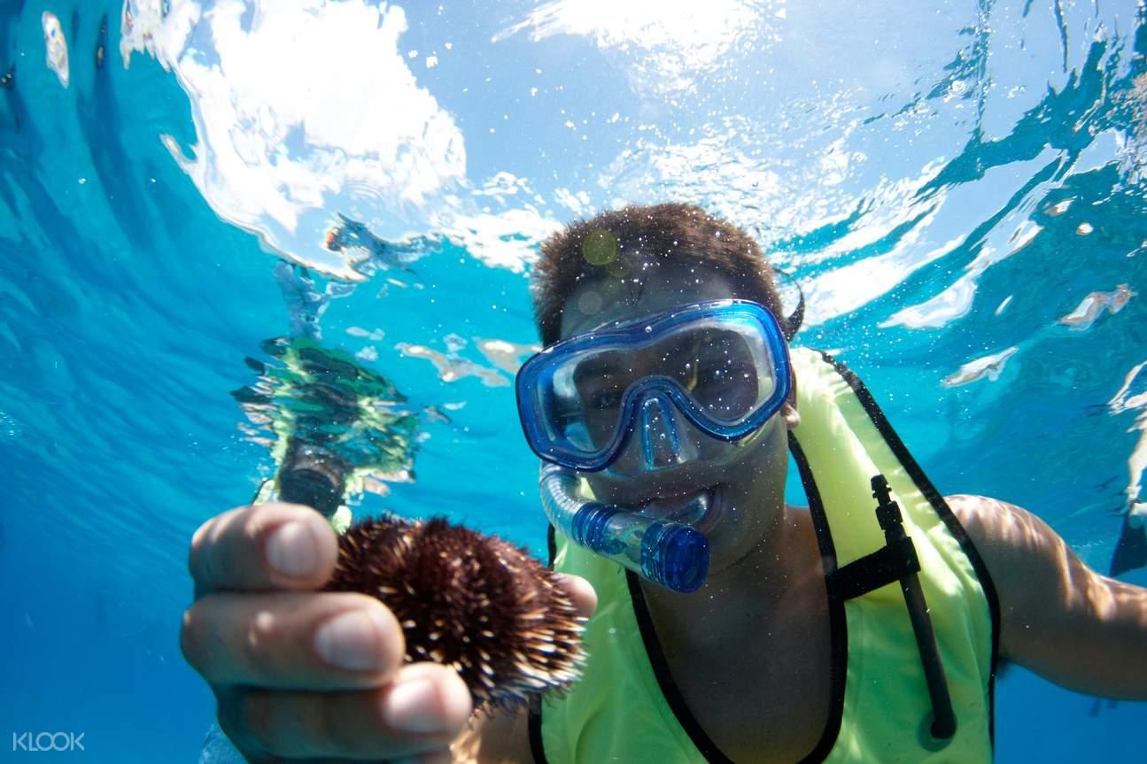 夏威夷观海龟,欧胡岛浮潜,欧胡岛帆船出海,欧胡岛帆船,夏威夷帆船,欧胡岛水上活动