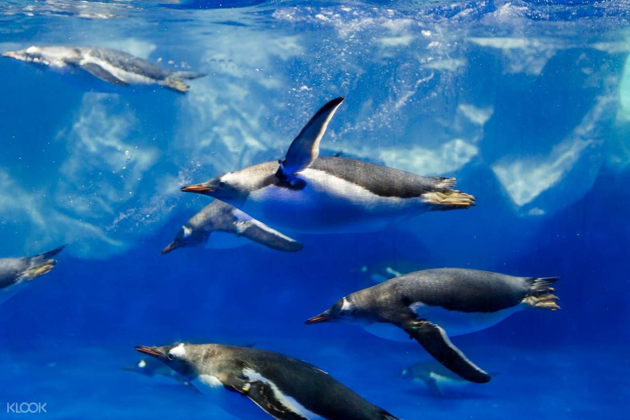 penguins Sea Life Kelly Tartlon's Aquarium