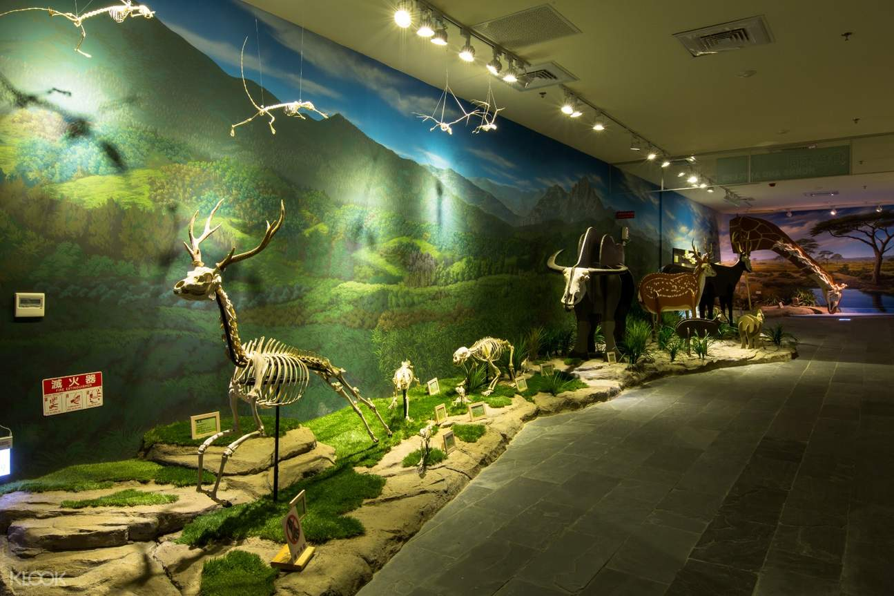 樹谷生活科學館是台南最具規模的自然史博物館,也是首座以骨骼標本為主要展示的博物館,裡面有生物、考古、科學為三個主軸