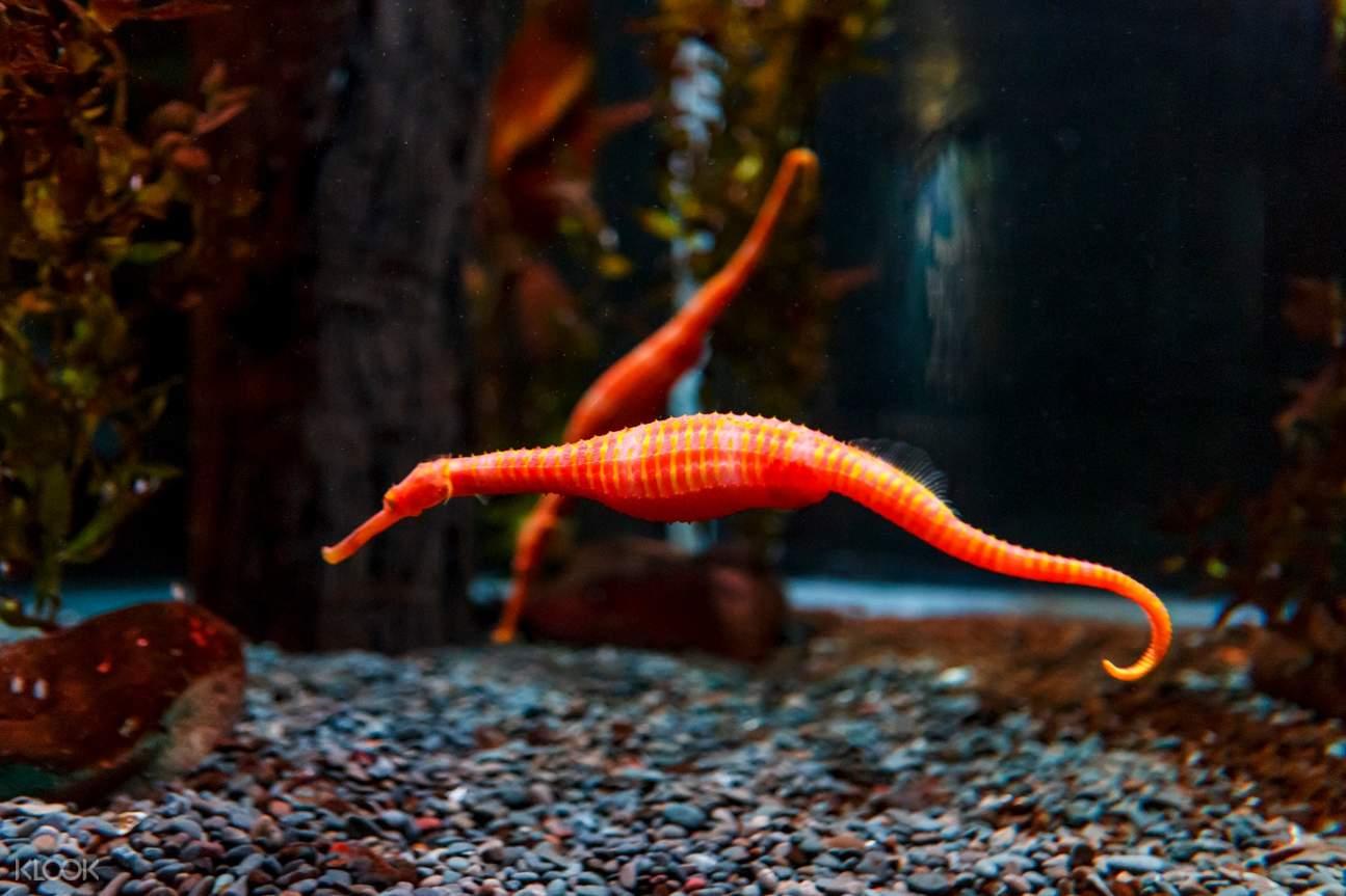 seahorses Sea Life Kelly Tartlon's Aquarium