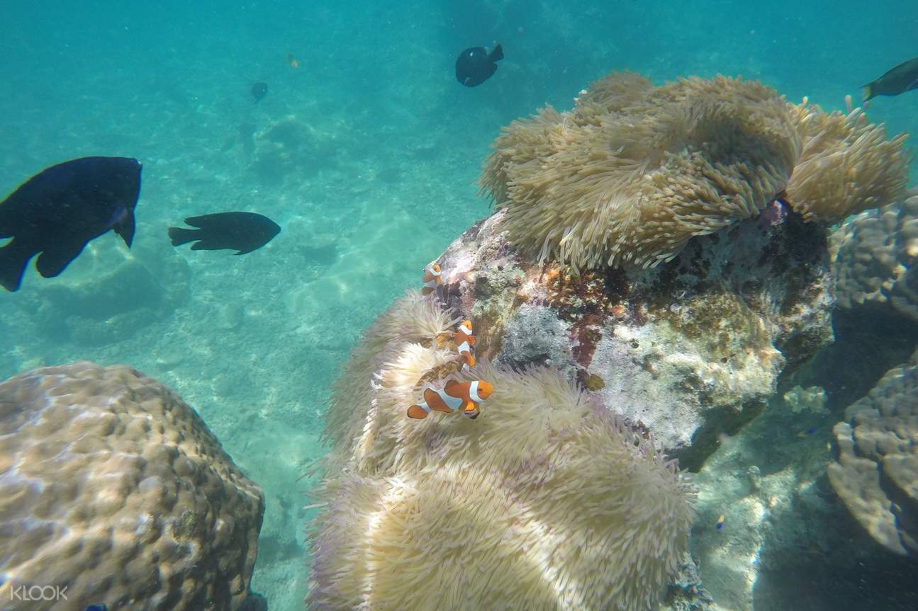 corals and fish underwater