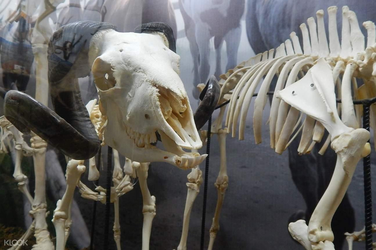 animal skeleton in d'bone collector museum