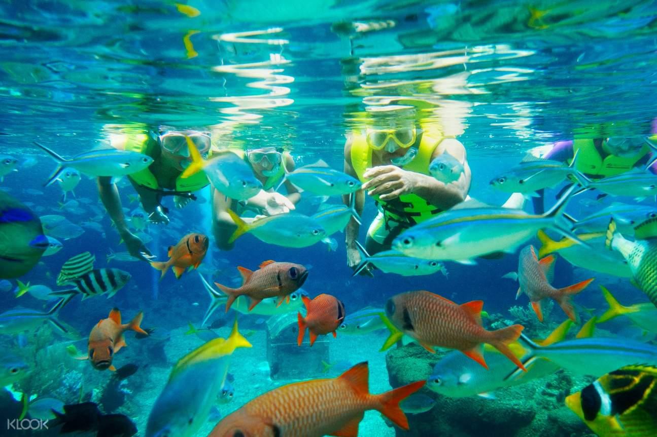 Adventure Cove Water park Singapore tickets