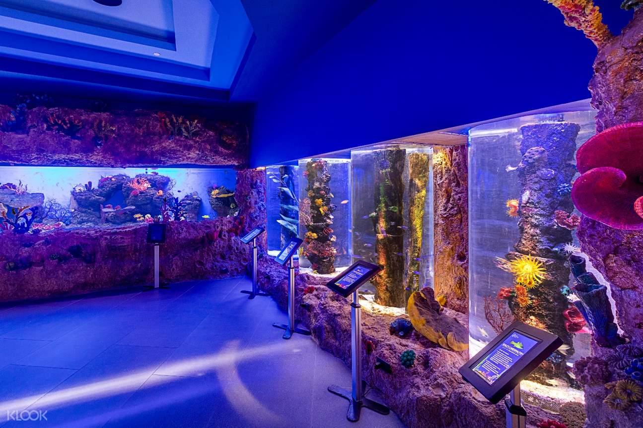 aquarium with colorful albeit dim lights