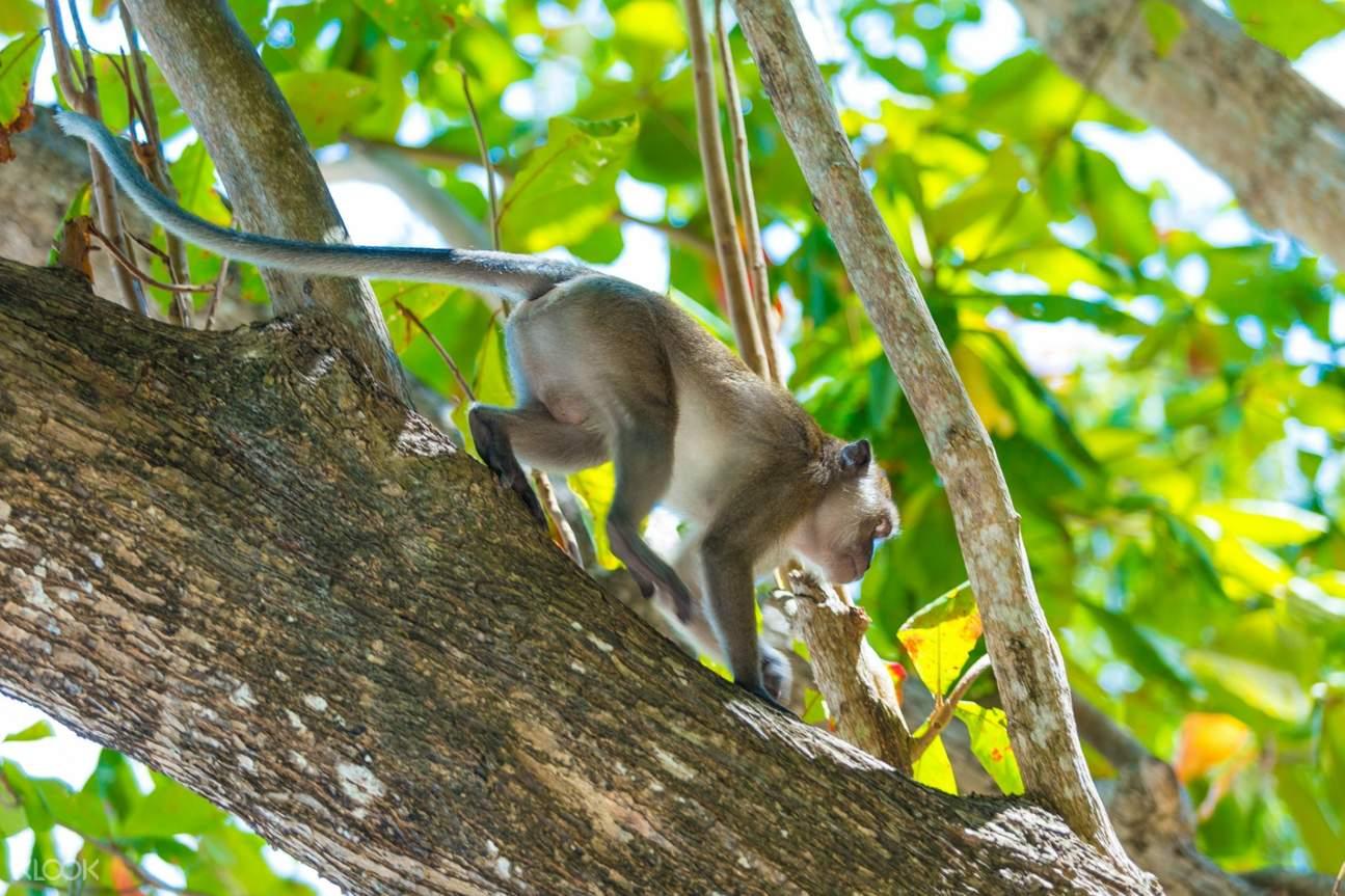 ลิงในอ่าวลิง