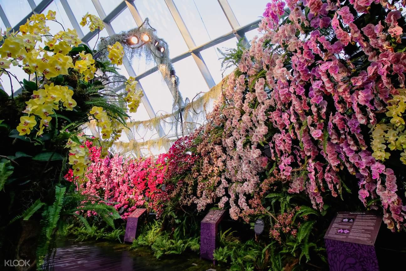 Cloud Forest Orchid Haven
