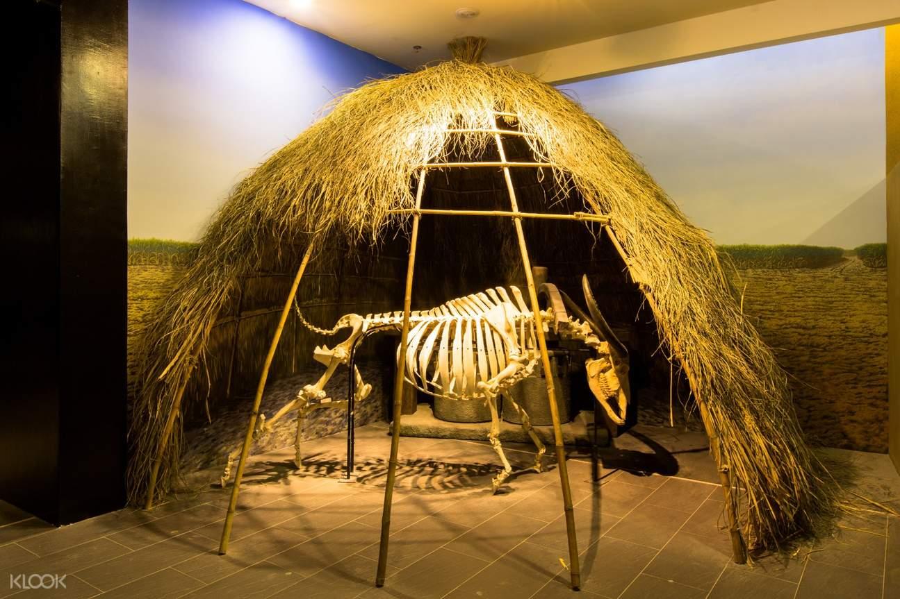 展示館內的恐龍骨骼標本與長毛象的化石標本,是小朋友最愛的兩個明星,兩座標本高聳的氣勢讓許多孩子一進門就驚呼不已,只要租借導覽機器,站在標本前方的定點都還有互動式的體驗導覽,燃起孩子們探索的慾望與想像力
