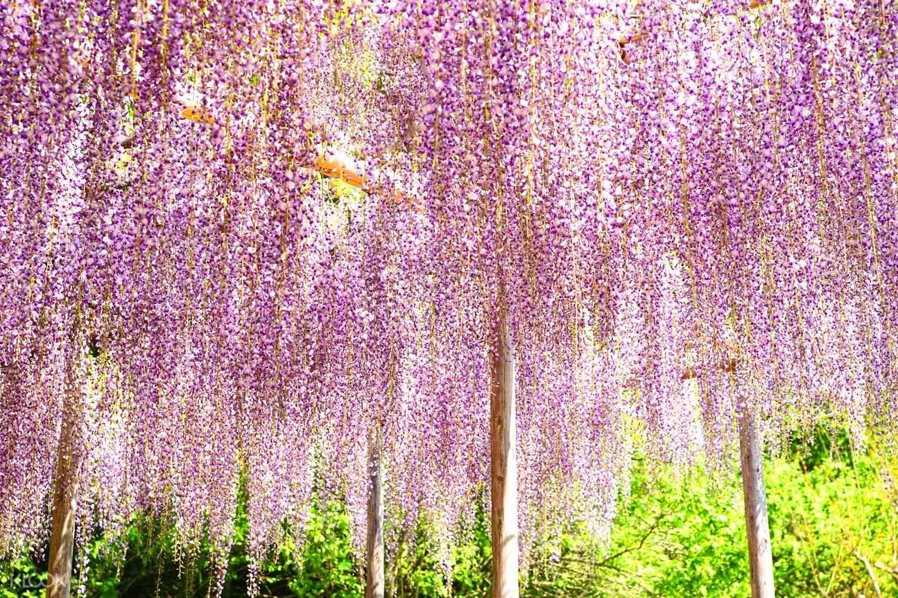 pink fuji flowers hanging
