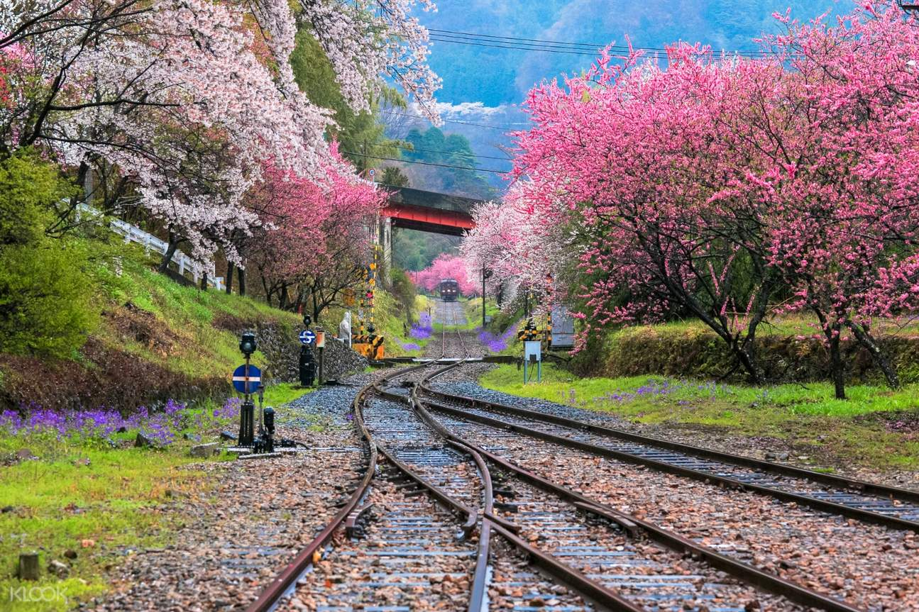 train tracks in the middle of spring flower trees