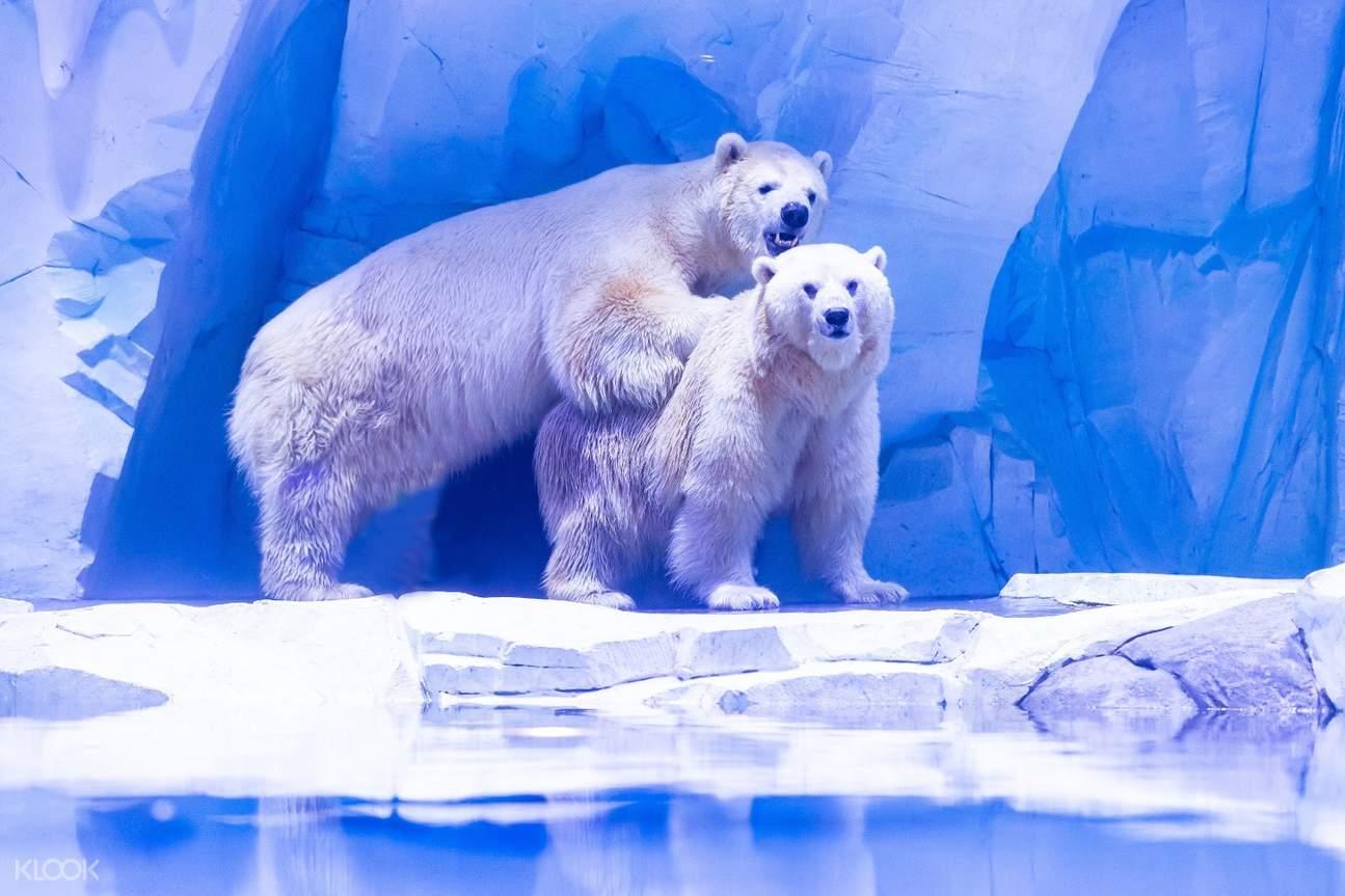 上海海昌海洋公园,北极熊