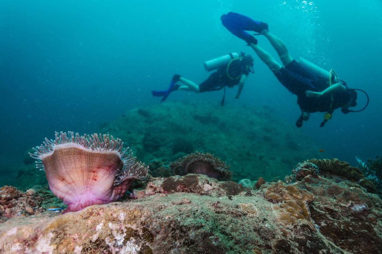 PP島水肺潛水課程