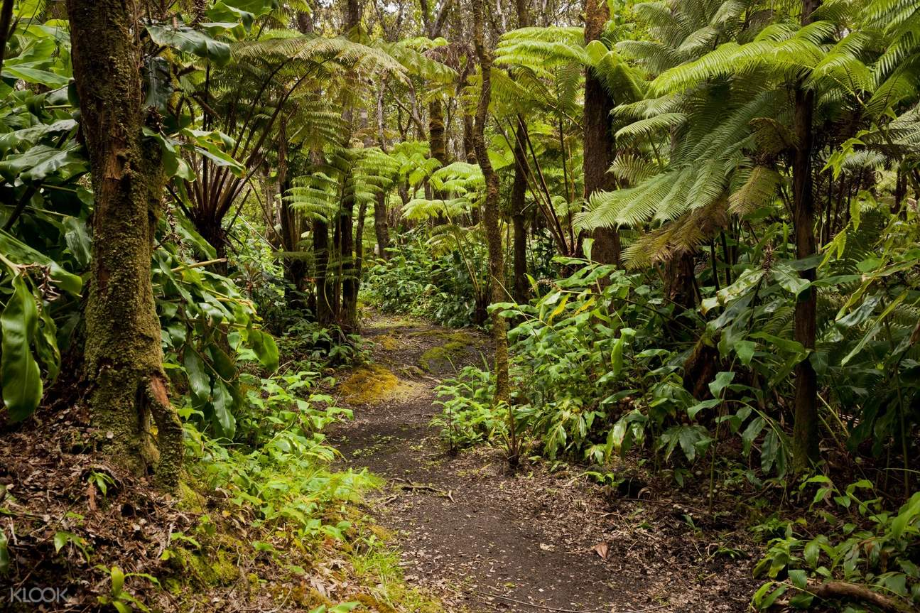 madikeri forest