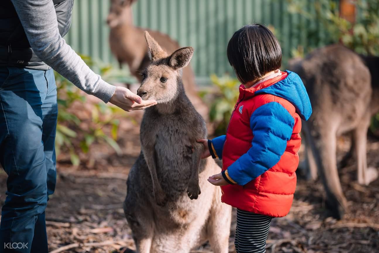 feeding kangaroo at gumbuya world