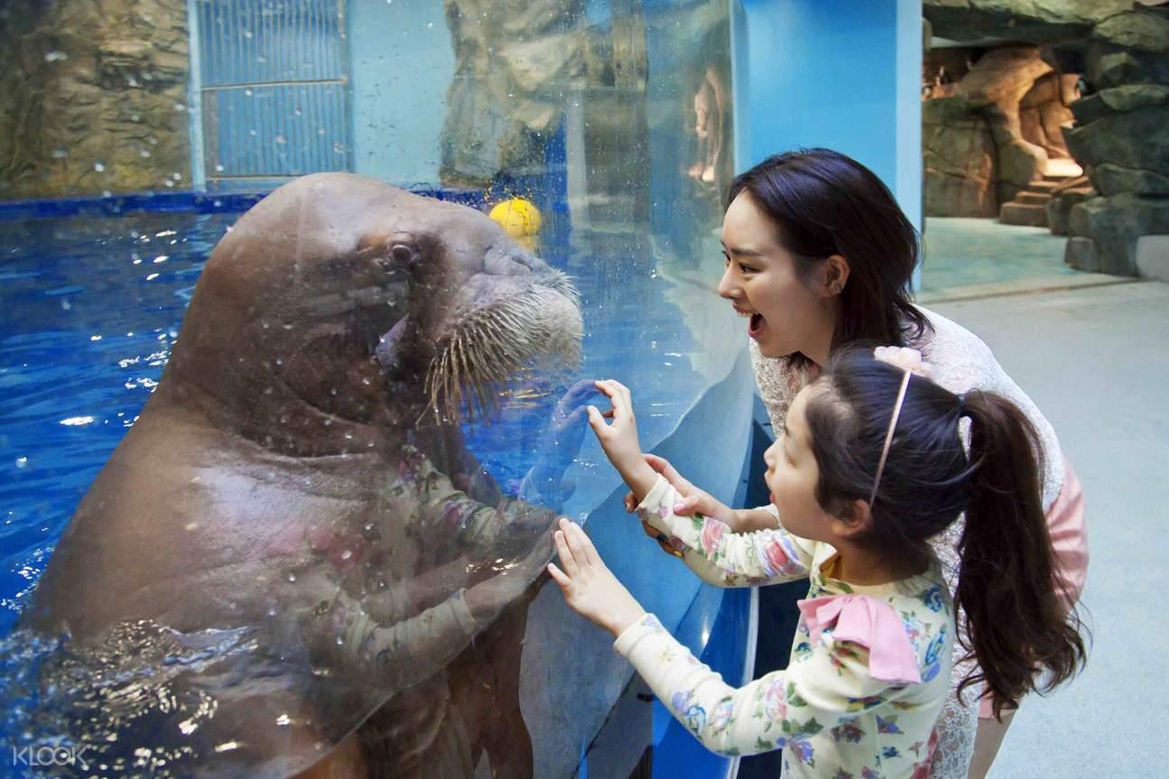stingray aqua planet gyeonggi do