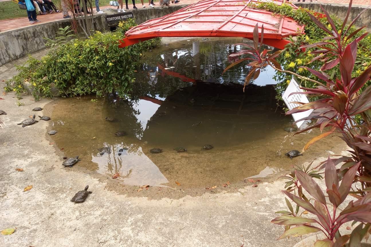the little pond is full of tortoises