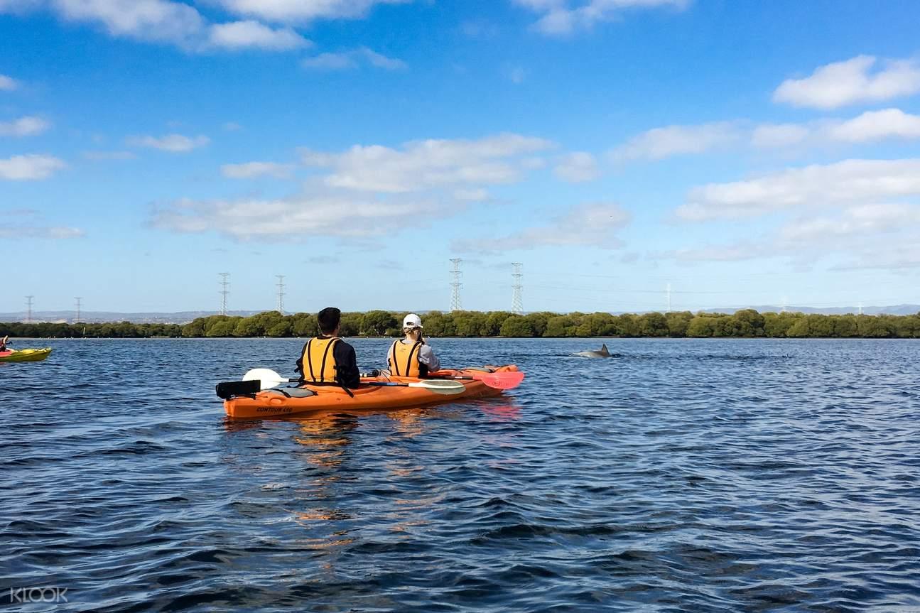 Dolphin Sanctuary Kayaking Tour in Adelaide