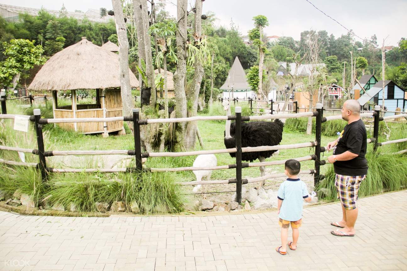 an ostrich in Lembang Park and Zoo