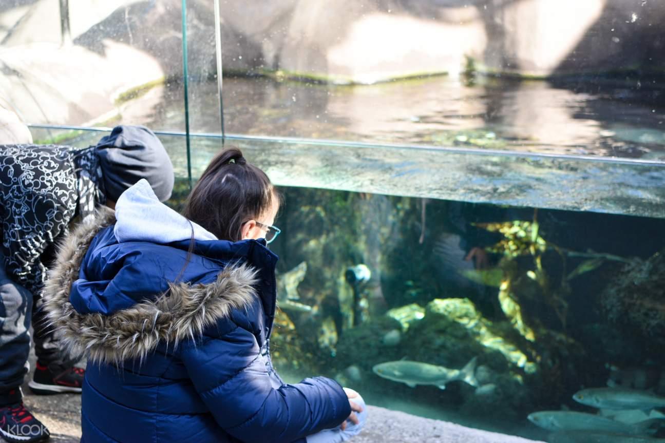 melbourne zoo ticket prices