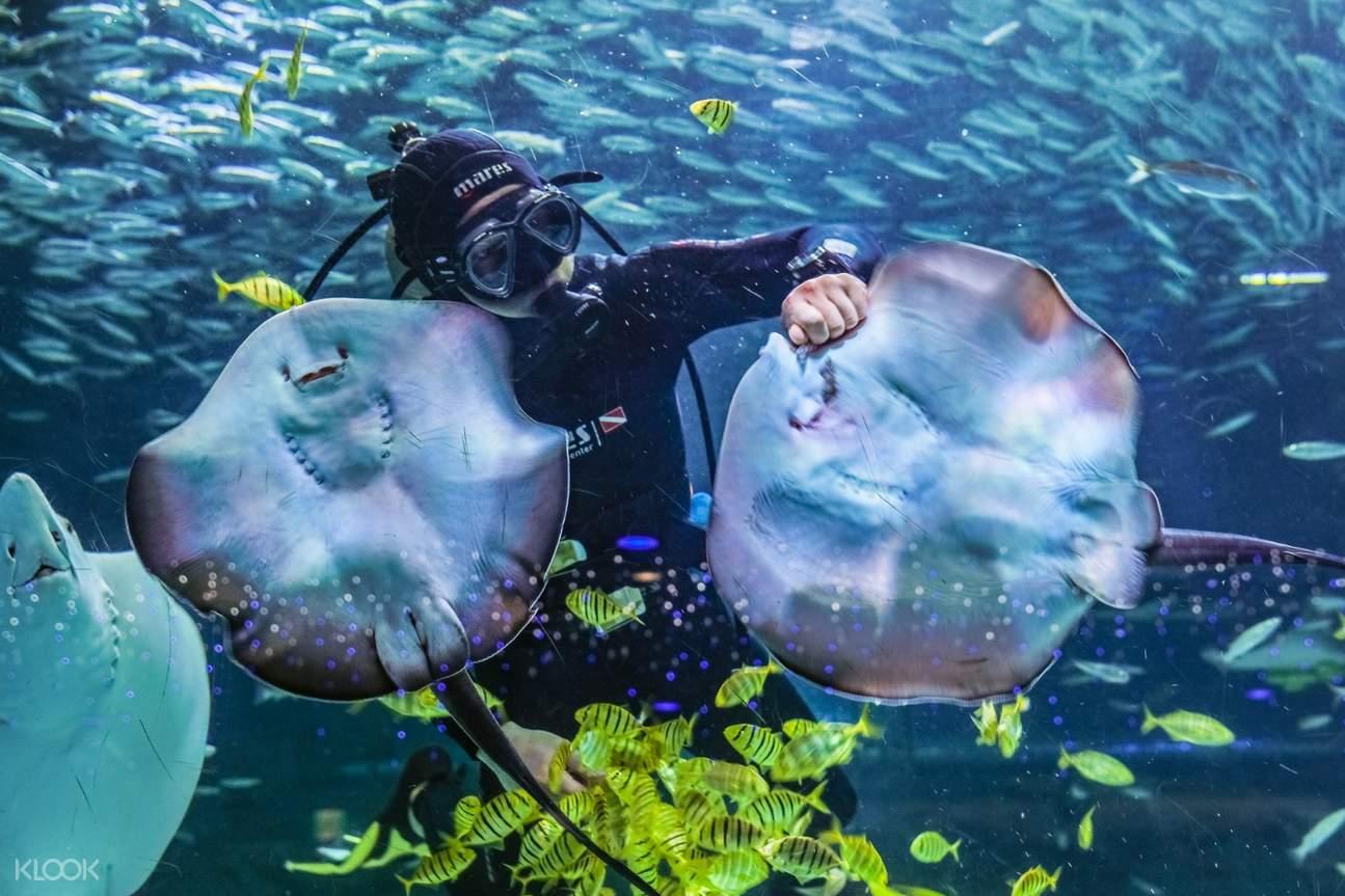 Diver at coex aquarium