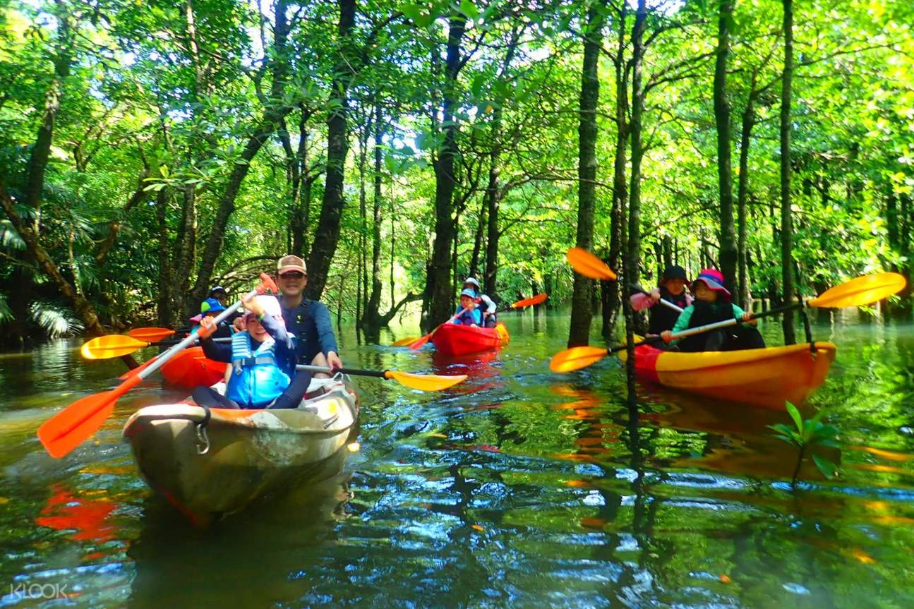 canoe through the magnificent mangroves