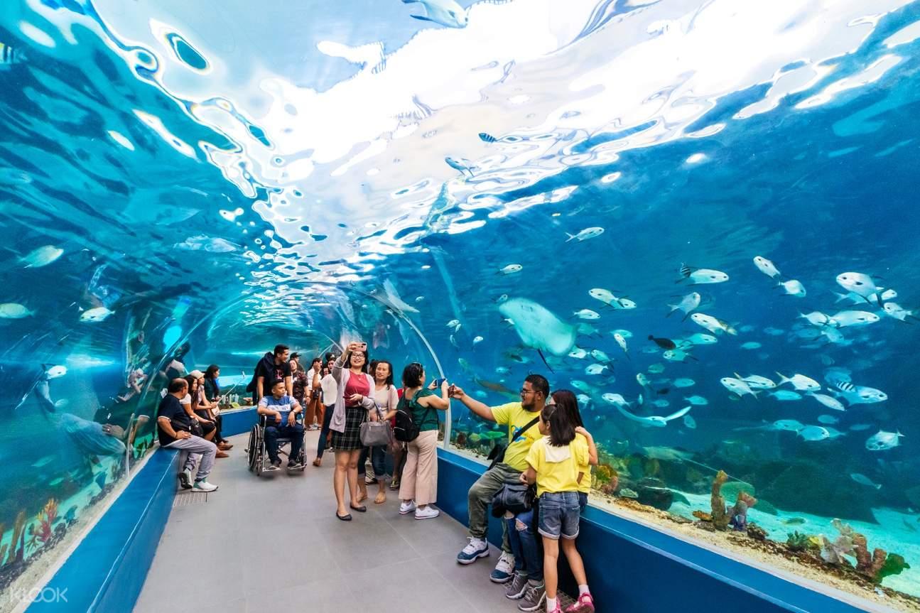 tourists in ocean park walking along a tunnel-shaped aquarium