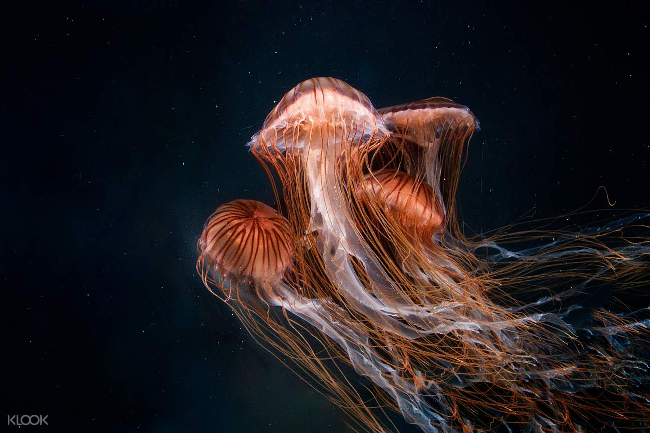 Enjoy an amazing time at the aquarium of the pacific